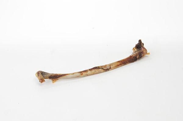 Flügelknochen vom Strauß - Hundeknochen kaufen
