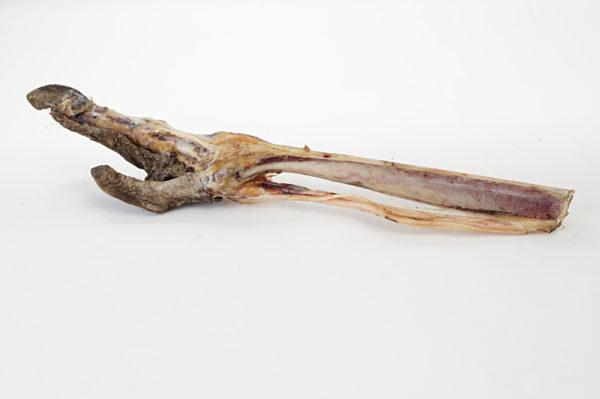Fußknochen vom Strauß - Hundeknochen kaufen