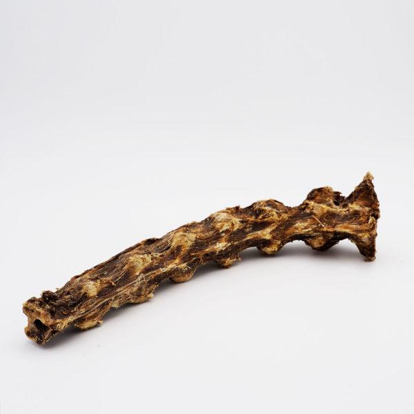 Hundeknochen vom Strauß - Halswirbel